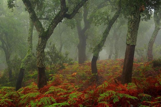 Diez fotografías para celebrar el Día Mundial del Medio Ambiente