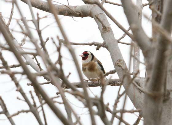 Varios tipos de aves se concentran en esta zona, donde encuentran su hábitat natural.  Foto: Belen Vargas
