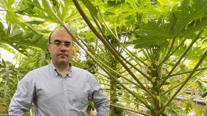 Juan José Hueso es el responsable del Área de Fruticultura de la Estación.
