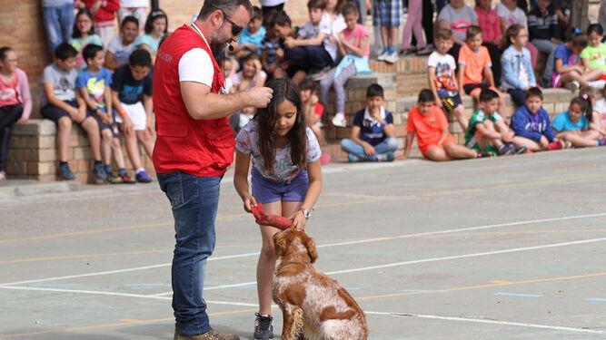 Exhibición de adiestramiento que se ha llevado ya a cabo por la FAC en uno de los colegios con alumnos de Primaria.