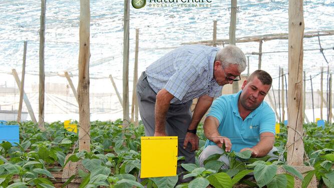 Manuel, José y Javier Giménez han logrado exportar sus frutas y verduras a buena parte del continente europeo.