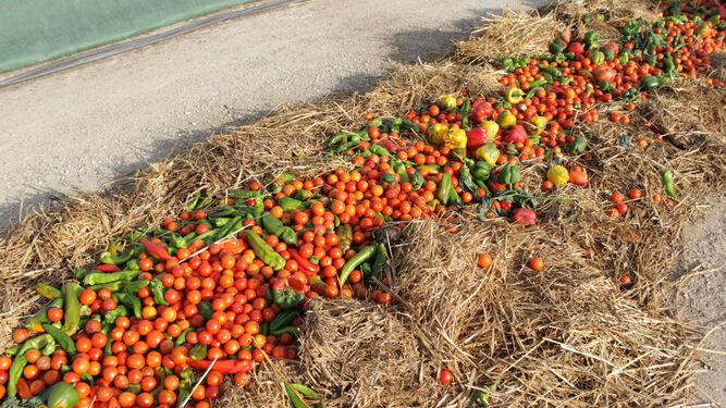 Más del 50% de las fincas nutre su suelo con su compost.