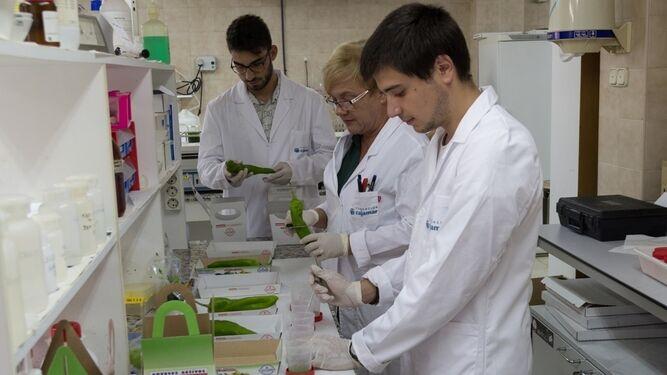 Investigadores de La Estación Las Palmerillas,  en laboratorio, analizando los beneficios en el mantenimiento del cultivo.
