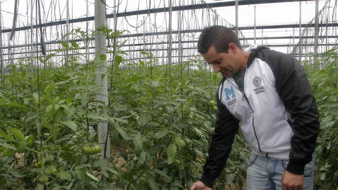 Tomate Lover ofrece un producto 100% artesanal desde la plantación.
