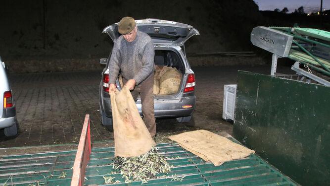 Los productores almerienses ya están en la recta final de la recolecta, que se extenderá hasta el mes de enero.