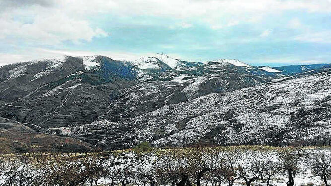 Paraje La Loma de Bacares, en la Sierra de Los Filabres, donde se disputó el XXIV campeonato provincial de perdiz con reclamo macho.