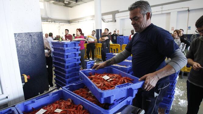 Los planes que pretenden Ministerio y Comisión echarían al traste el futuro del sector, según los propios empresarios pesqueros de Almería.