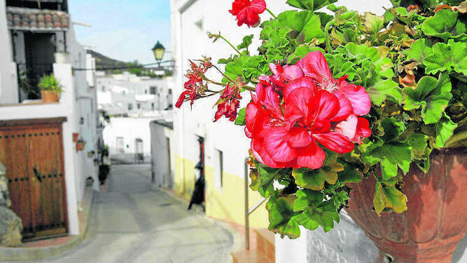 Lucainena Celebra El Xv Dia De Las Flores