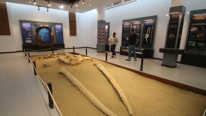 La ballena apareció hace más de una década en Viator